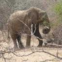 p1020922_olifant